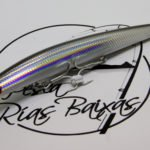 Shore Line Shiner Anchovy-1