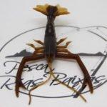 Vagabong Crust Bug 4.5″-1